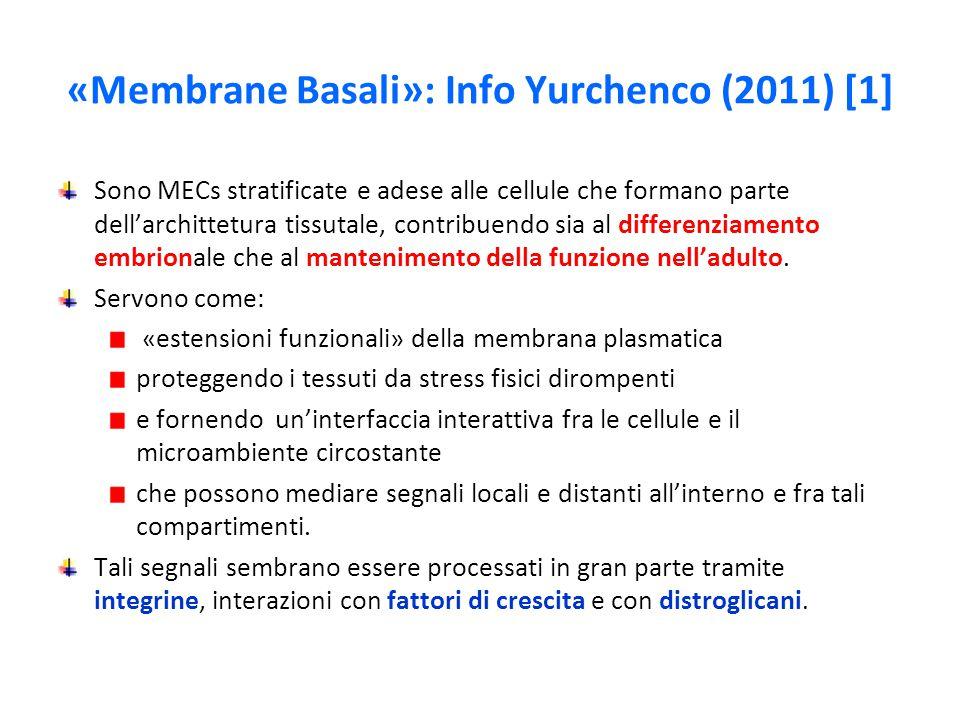 «Membrane Basali»: Info Yurchenco (2011) [1]